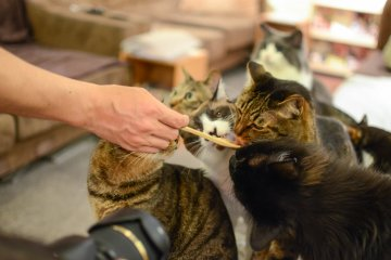 <p>Feeding time at the cat cafe</p>
