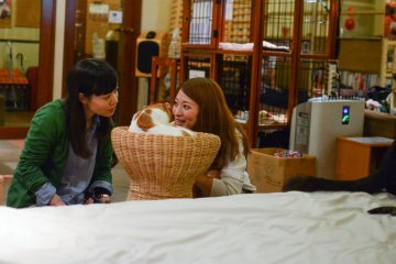 <p>Interacting with the cats, who look relaxed and healthy</p>