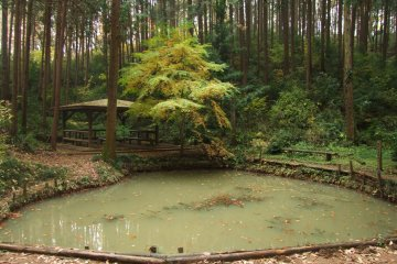 <p>Turn right at the pond</p>