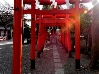 These tori lead to a small Inari shrine