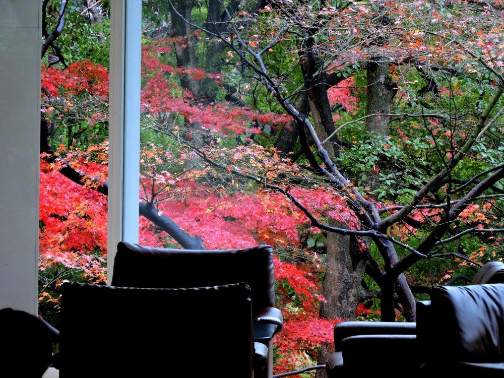 호텔의 라운지 '모미지'에서 볼 수 있는 아주 붉은 단풍잎