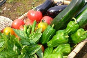 スタッフが愛情込めて育てた無農薬有機野菜。四季折々の恵みが味わえます。