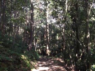 Hanya beberapa menit berjalan kaki, Anda akan dikelilingi oleh hutan yang damai