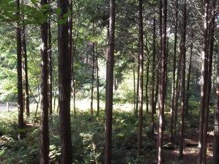 Глядя вниз сквозь высокие деревья