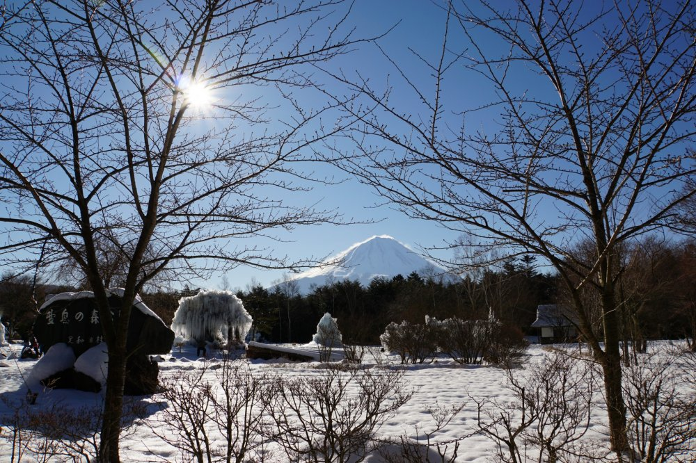 It's a magical winter wonderland at Lake Saiko's Ice Tree Festival!