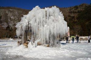 この樹氷、まるで氷で創った木の彫刻みたいだ