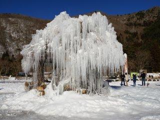 Дерево Дзюхё представляет собой величественную ледяную скульптуру