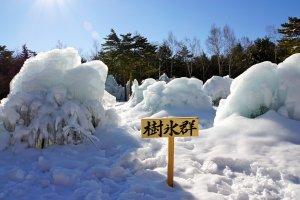 Столько ледяных деревьев, вы будете поражены!