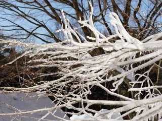 Surrounded by frosted tree branches
