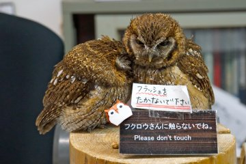 <p>The adorable duo,&nbsp;Pocky &amp; Cocoa, are the owls you&#39;ll first set your eyes on. Kawaii!</p>