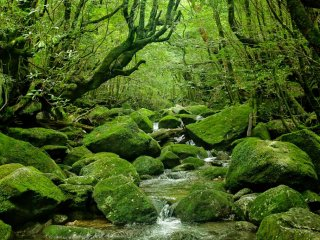 Rivers are full of moss covered stones.