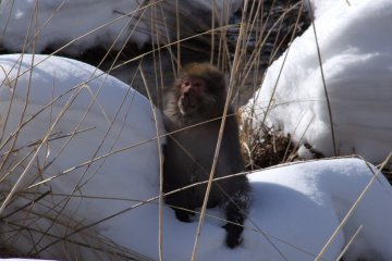 <p>One of the many wild monkeys to inhabit the area</p>