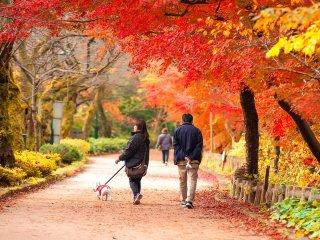 Un couple se promène sous les feuilles