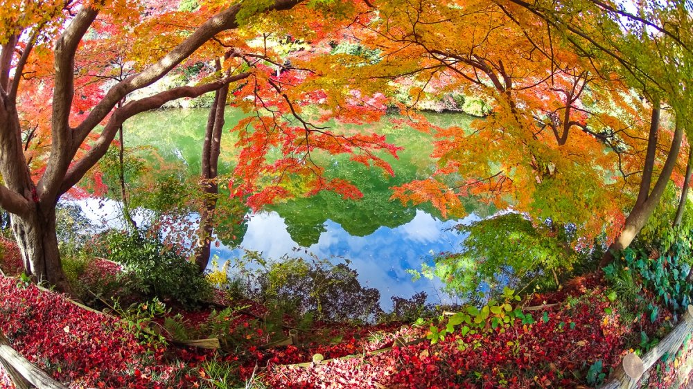 Reflet des arbres et du ciel
