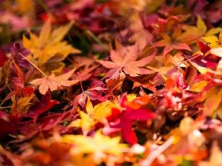 Des feuilles mortes sur le sol