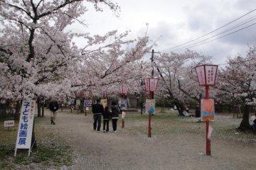 Sakura Path in Castle Grounds
