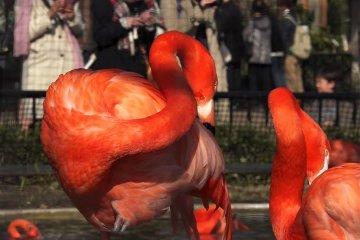 우에노 동물원 2탄: 아름다운 새들