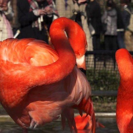 上野動物園 -2 美しい鳥たち