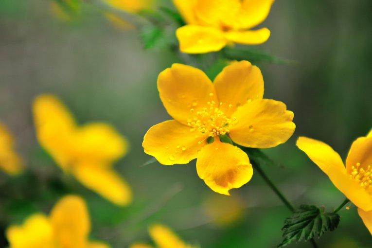 Bunga di Lelehan Salju Azumino