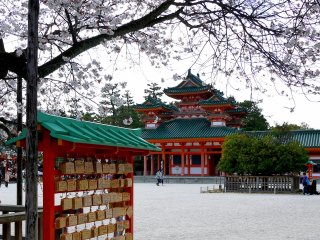 The bough of a cherry tree frames a view of the red and green shrine