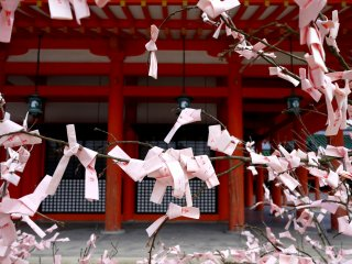 In spring the shrine has pink omikuji (fortune papers)