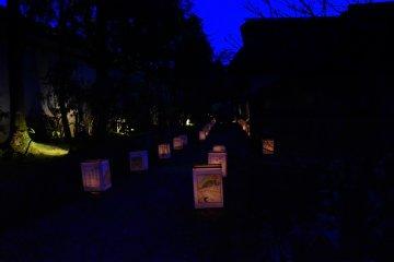방문객들을 마법의 밤으로 안내하는 등불의 희미한 빛