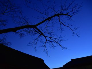Silhouette of a cherry tree and buildings under the twilight sky