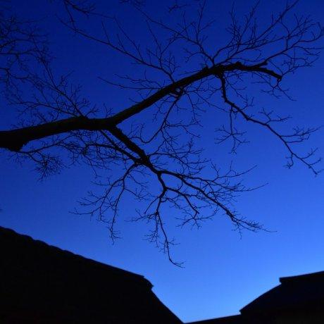 Magical Night at Yokokan in Fukui