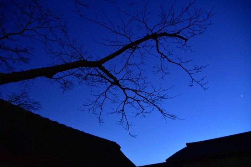 황혼의 하늘 아래 있는 벚나무와 건물들의 실루엣