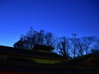 A parade of bare trees under the deep-blue sky