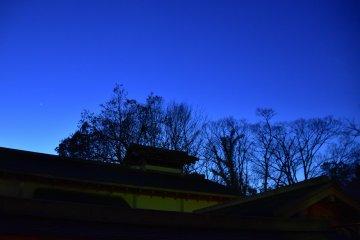 푸른 하늘 아래 벌거벗은 나무들의 행렬