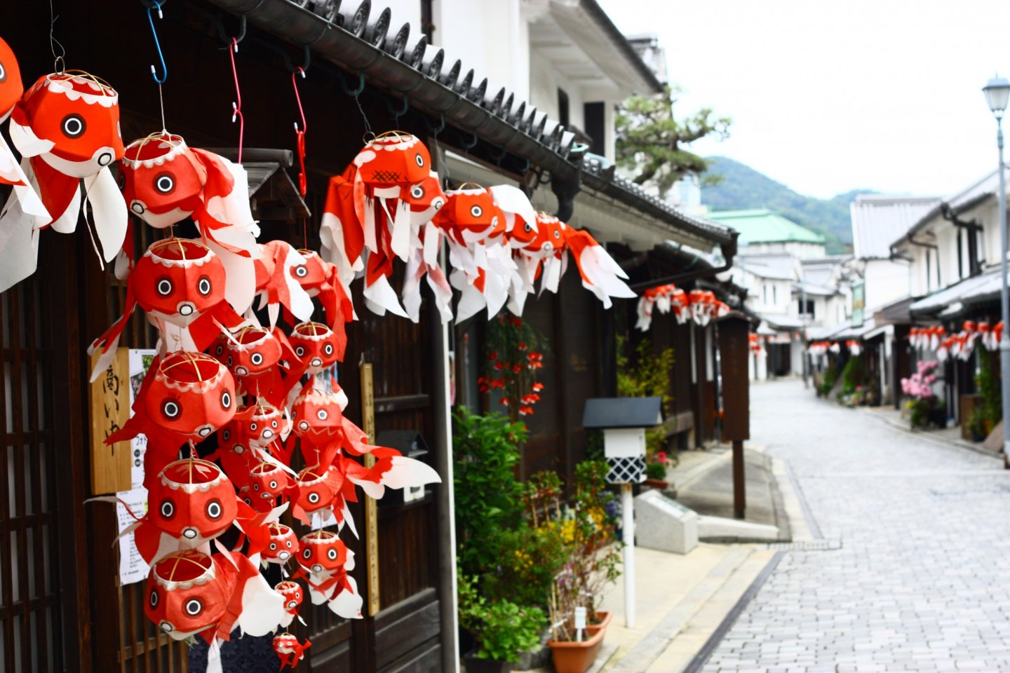 Goldfish lanterns line the streets in the Shirakabe no Machi.