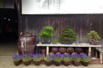 <p>A pretty display of flowers and bonsai trees outside the&nbsp;Sagawa soy sauce factory.</p>