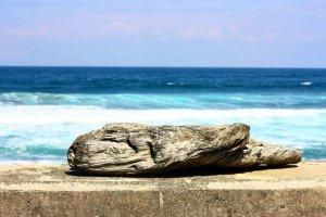 Gelombang pasang yang kuat membawa banyak puing ke garis pantai dekat Iwayaguchi, termasuk potongan kayu apung yang diputihkan garam ini.