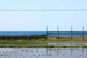 With relatively little space suitable for farming, the rice fields go right up to the water's edge.