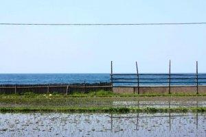 Com um espaço relativamente pequeno para a agricultura, os campos de arroz, vão mesmo até ao mar