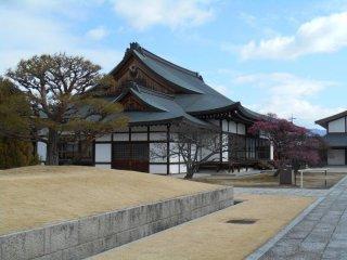 Sur le site du temple on peut apercevoir de nombreux pruniers