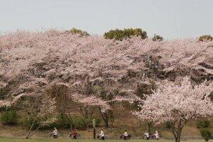 Oizumi Ryokuchi Park