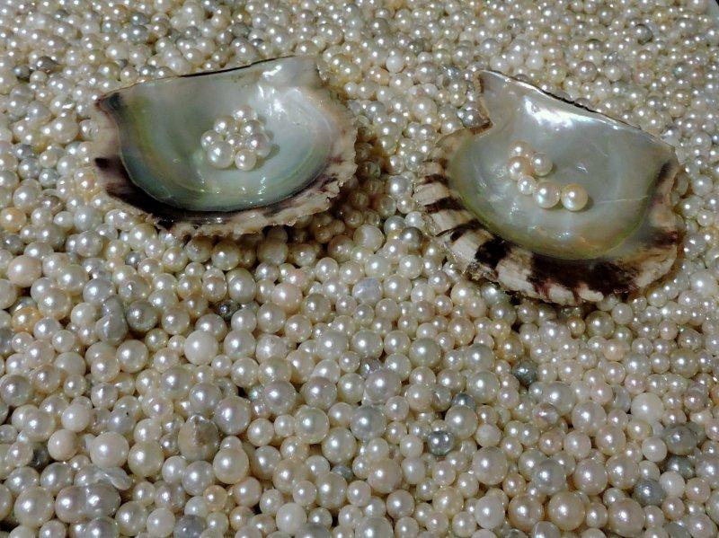 <p>Precious sea gems!</p>