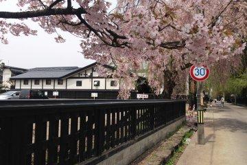 Spring in Kakunodate