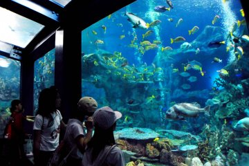 <p>The coral reef tank is the largest tank at the aquarium</p>