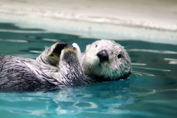 <p>I was really looking forward to meeting the sea otter!</p>