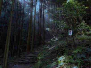 遍路道は杉木立の中を進む