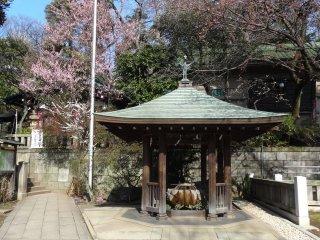 ฤดูดอกไม้บานที่ศาลเจ้าโกะโจะเท็น