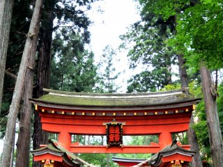 The path leading to the main hall is surrounded by ancient cedar trees.