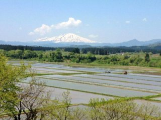 Mount Chokai is Yamagata's tallest mountain. Here, the rice fields have been flooded in preparation for planting, whilst all around the countryside comes back to life after the winter.