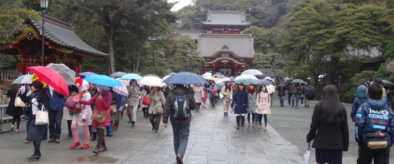 ในวันที่สายฝนพร่างพรม โปรยปรายอย่างต่อเนื่อง ทำให้บริเวณรอบๆ ศาลเจ้าซึรุกะโอะกะ ฮะชิมันกุ แต่งแต้มไปด้วยดอกร่มต่างสี ตัดกับอาคารสีแดงของศาลเจ้าอย่างสวยงาม