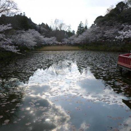Springtime in Chiba