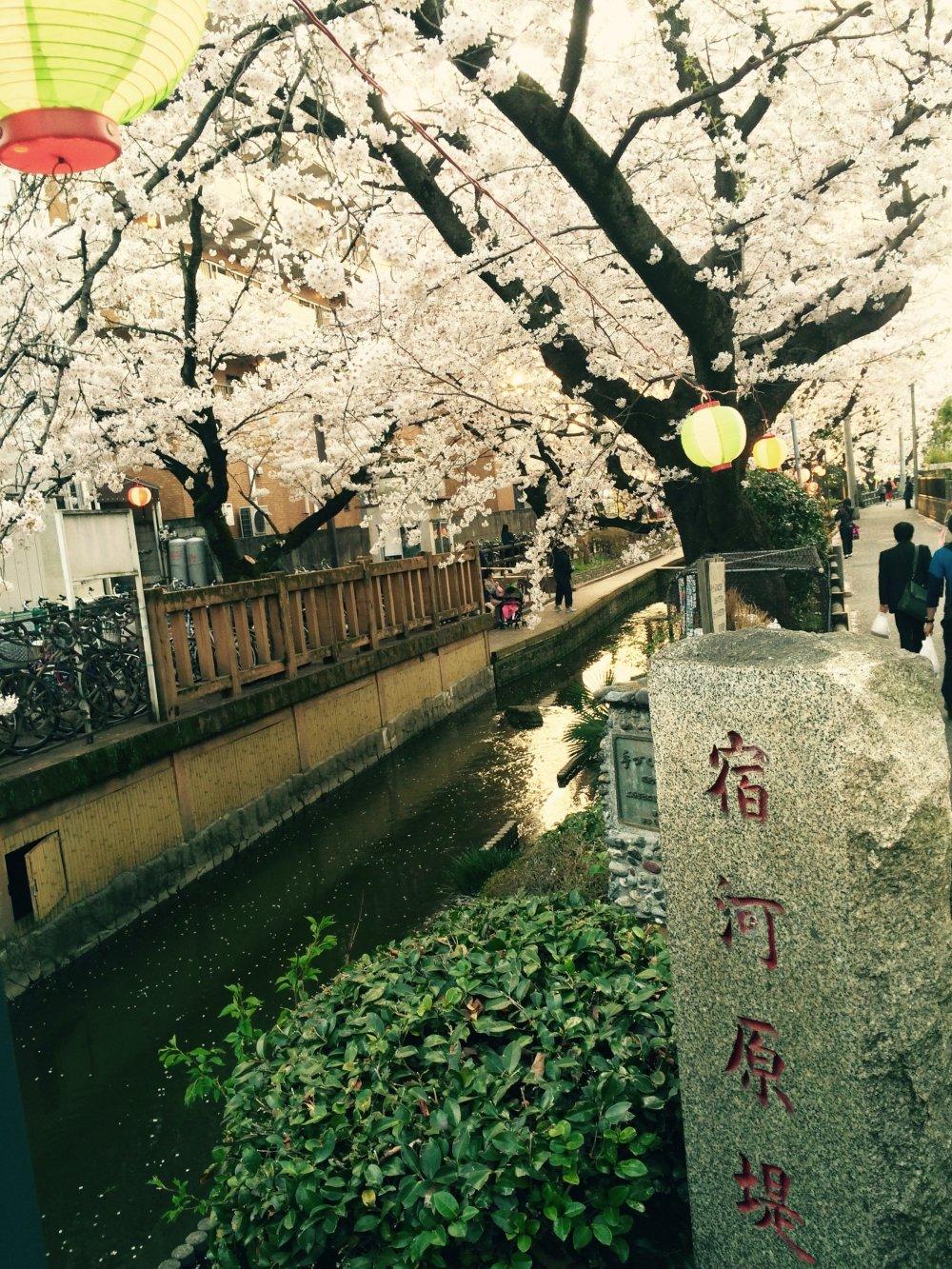 Este canal ladeado de flores de cerejeira fica apenas a 100 m da estação de Shukugawara