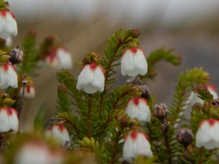 Great variety of alpine flowers never seen before